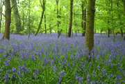 left_woodland